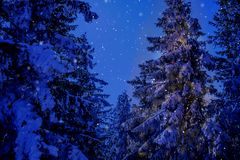 Winter wonderland christmas mountain scenery with centuries-old spruce and pine in the austrian Alps in night magic light. Landscape of Semmering. Snowflakes stock photo