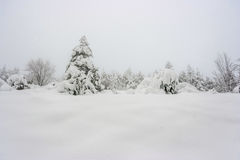Winter Wonderland. Cloudly sky and Snow in the Trees Stock Photography