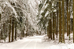 Winter Wonderland. Cold snowy winter wonderland in the Black Forrest Region of Germany. Sweet Solitude. White and Lonely Landscape stock images