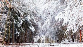 Winter Wonderland. Cold snowy winter wonderland in the Black Forrest Region of Germany. Sweet Solitude. White and Lonely Landscape with trekking trails in the stock photos