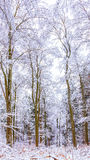 Winter Wonderland. Cold snowy winter wonderland in the Black Forrest Region of Germany. Sweet Solitude. White and Lonely Landscape with trekking trails in the stock photo