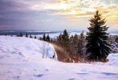 Winter Wonderland Stock Photos