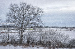 Winter Wonderland Countryside Royalty Free Stock Images