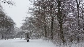 Winter wonderland in the English gardens Stock Photo