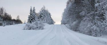 Winter wonderland. In Estonian forest Stock Photography