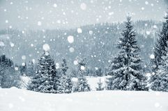 Winter wonderland with fir trees. Christmas greetings. Concept with snowfall Stock Images