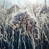 Winter wonderland. Flower in winter stock photos