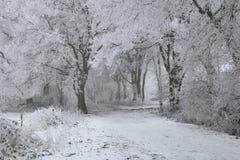 Free Winter Wonderland Forest Stock Images - 84727144