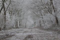 Winter Wonderland Forest. In the netherlands stock photos