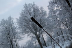 Winter Wonderland Forest. In the netherlands royalty free stock images