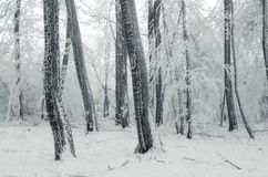 Winter wonderland forest with snow stock image