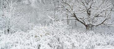 Winter wonderland. Stock Photos
