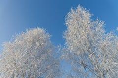 Winter wonderland. Frosty trees on blue sky. Winter wonderland. Frosty trees on blue sky stock photos