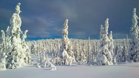 Winter wonderland in Hedmark county Norway. Christmas snow and beautiful winterlandscape royalty free stock images