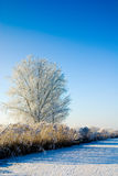 Winter wonderland in Holland Royalty Free Stock Photos