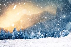 Winter wonderland - Christmas background with snowy fir trees in. Winter wonderland - hristmas background with snowy fir trees in the mountains stock photos