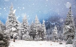 winter wonderland - Christmas background with snowy fir trees in royalty free stock photos