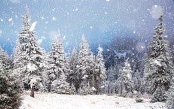 Winter wonderland - Christmas background with snowy fir trees in. Winter wonderland - hristmas background with snowy fir trees in the mountains royalty free stock photos