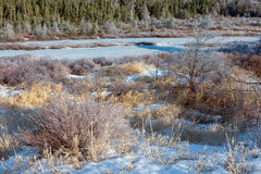 Winter Wonderland. With ice on grass and trees stock image