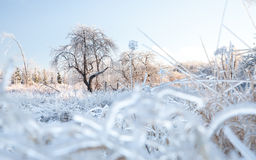Winter Wonderland Ice Scene Royalty Free Stock Image