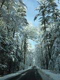 Winter wonderland. Ice and snow covering road and branches Royalty Free Stock Image