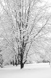 Winter Wonderland II. Black and white trees covered with fresh snow royalty free stock photo