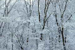Winter Wonderland - Illinois stock photography