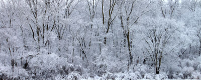 Winter Wonderland Illinois Royalty Free Stock Images