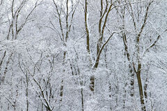 Winter Wonderland in Illinois Stock Image