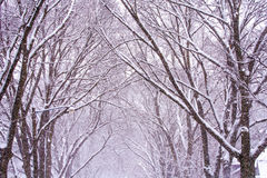 Winter Wonderland in Iowa Royalty Free Stock Photography