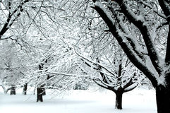 Winter Wonderland IV. Black and white trees covered with fresh snow stock photo