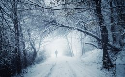 Winter wonderland landscape with man on forest road Royalty Free Stock Image