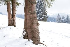 Winter Wonderland landscape, snowy fir tree background. Winter Wonderland snow on trees landscape stock images