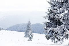 Winter Wonderland landscape, snowy fir tree background. Winter Wonderland snow on trees landscape stock photos