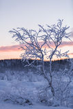 Winter wonderland lapland scene sunset Royalty Free Stock Images