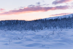 Winter wonderland lapland scene sunset Stock Image