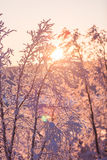 Winter wonderland lapland scene sunset Stock Photos