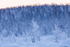 Winter wonderland lapland scene sunset Stock Photo