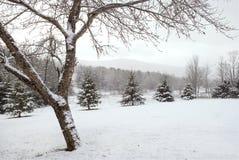 Winter Wonderland Mountain Landscape Royalty Free Stock Images
