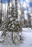 Winter Wonderland. A nice scenic image of the wonderland that winter can create in Ontario Canada stock photos