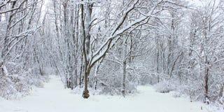 Winter Wonderland Northern Illinois. Hiking trail though a winter wonderland in northern Illinois Royalty Free Stock Images
