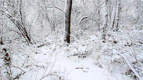 Winter Wonderland in northern Illinois stock video footage