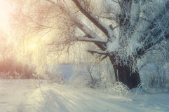Winter wonderland picturesque landscape in cold winter morning with winter soft sunshine Stock Image