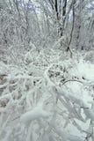 Winter Wonderland Illinois. Winter wonderland at Rock Cut State Park in Illinois royalty free stock photography