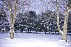 Winter Wonderland Scene Royalty Free Stock Images