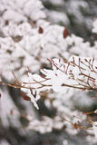 Winter Wonderland Scene Stock Photo