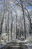 Winter Wonderland Scene Royalty Free Stock Images
