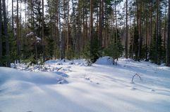 Snowy forest. Winter wonderland scenery in Russia an image of a snowy forest Royalty Free Stock Images