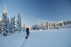 Winter wonderland and skier on ski-track royalty free stock photos