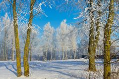 Winter wonderland with snow covered branches. On deciduous trees and blue sky stock photography
